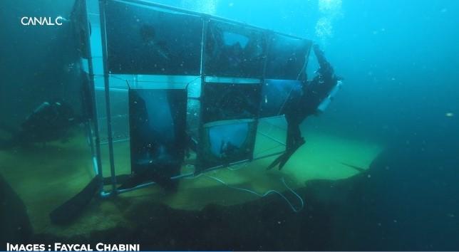 Galerie photos sous-marine – Carrière de Vodelée